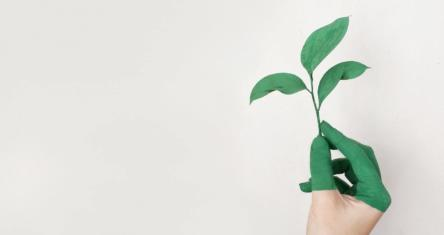Was bedeutet Nachhaltigkeit für Startups?